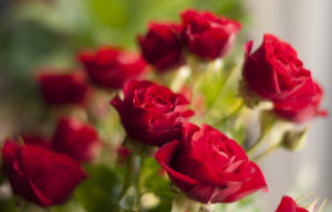 roses(small)
